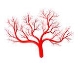 veines